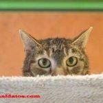 Como quitar el olor a popo de gato que huele tan feo