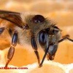 Porque las abejas mueren al picar a una persona y si pasa con todas
