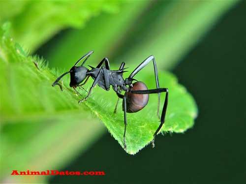 cuanto duermen las hormigas