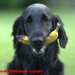 Frutas permitidas para perros y buenas para su salud