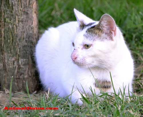 mi gato orina poco y muchas veces