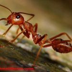 Conoce porque las hormigas no duermen, ¿mito o realidad?