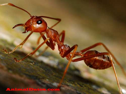 porque las hormigas no duermen