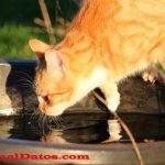 Conoce porque los gatos odian el agua, ¿mito o realidad?