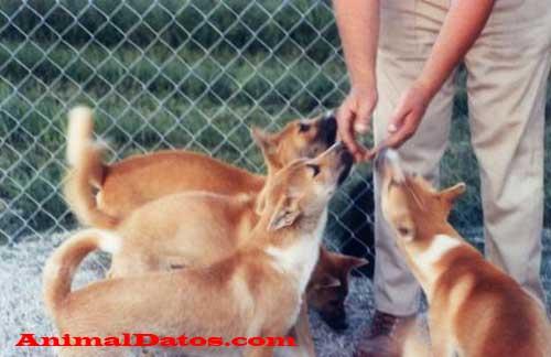 porque los perros te lamen las manos