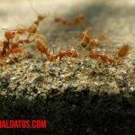 Como encontrar el hormiguero en casa y librarse de la plaga de hormigas