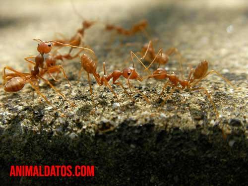 Como encontrar el hormiguero en casa