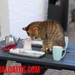 Como evitar que mi gato se suba a la mesa y sin lastimarlo