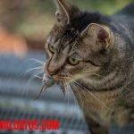 Como hacer que mi gato no traiga ratones a la casa, ni vivos ni muertos