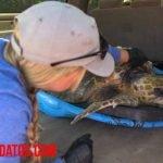 De que se enferman las tortugas y cuales son las enfermedades más comunes