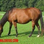 ¿Es verdad que los caballos duermen de pie? Mito o realidad