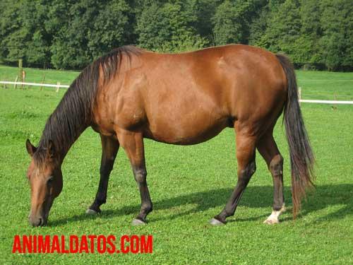 Es verdad que los caballos duermen de pie