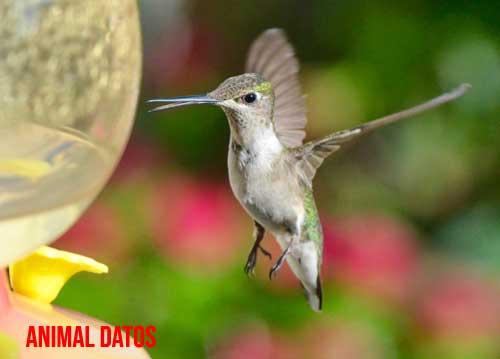 comida para colibries
