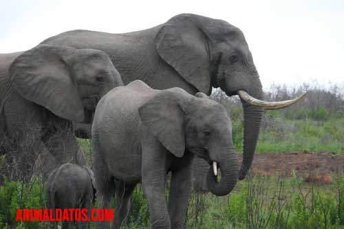 memoria de elefante