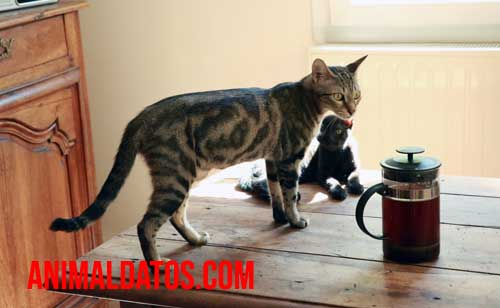trampas para gatos