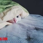 Como evitar que mi gato se suba a la cama e impedir duerma en ella