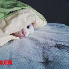 Como evitar que mi gato se suba a la cama