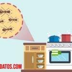 Como hacer que las hormigas se vayan de la cocina con remedios naturales
