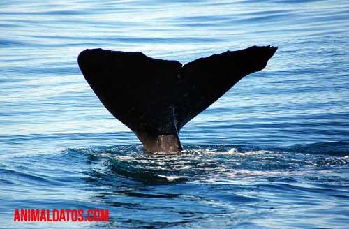 Como nacen las ballenas