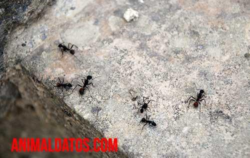 Consejos para prevenir hormigas en la cocina