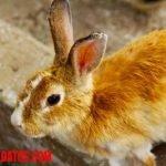 ¿El pelo de conejo es dañino? El problema de la tiña