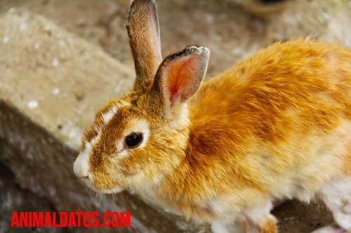 El pelo de conejo es dañino