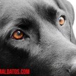 ¿Los perros distinguen los colores? ¡Mira como ven los perros el mundo!