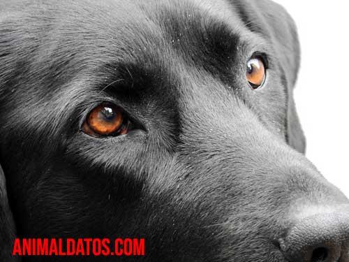 Los perros distinguen los colores