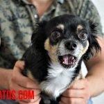 ¿Los perros pueden ver fantasmas, demonios y percibir lo sobrenatural