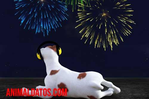 Miedo de los perros a los cohetes