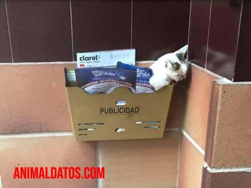 Muere gato abandonado en el buzón de Huesca