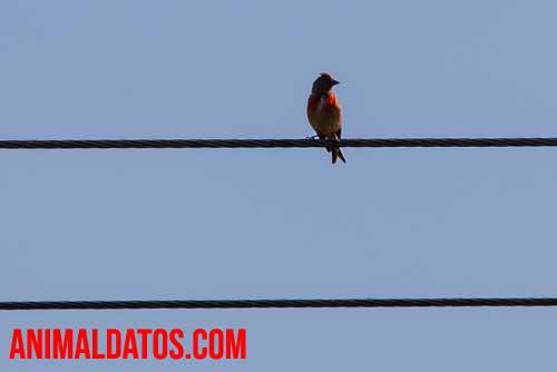 Porque las aves no se electrocutan