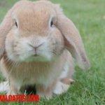 Porque los conejos mueven su nariz: ¿es parte de su lenguaje y comportamiento?