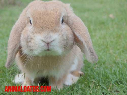 Porque los conejos mueven su nariz