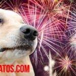Porque los perros se asustan con la pirotecnia y los cohetes. ¿Cómo actuar?
