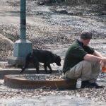 Se preparan refugios para mascotas y animales afectadas por el huracán Dorian