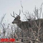 ¿Contradictorio? Científicos afirman que prohibir la caza de animales salvajes sería un error