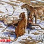 Datos del león de las cavernas o Panthera leo spelaea, antecesor del león moderno