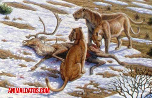leon de las cavernas caracteristicas