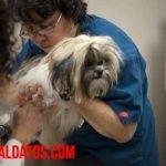 Crece peligrosamente el número de mascotas que se quedan sin vacuna por dueños antivacunas
