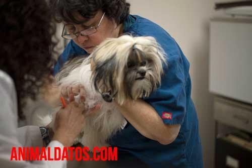 mascotas dueños antivacunas