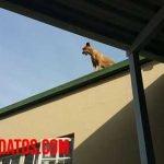 Peligros de dejar al perro en el tejado para el animal y otras personas