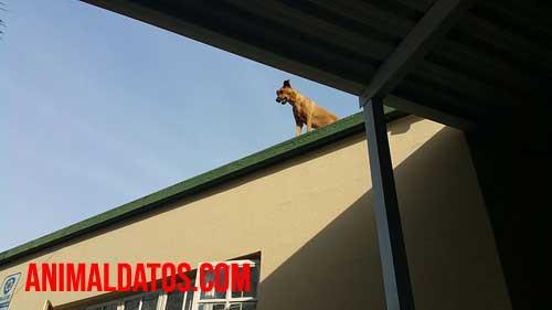 perro en el tejado