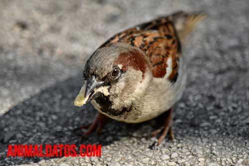 cómo comen los gorriones en la noche