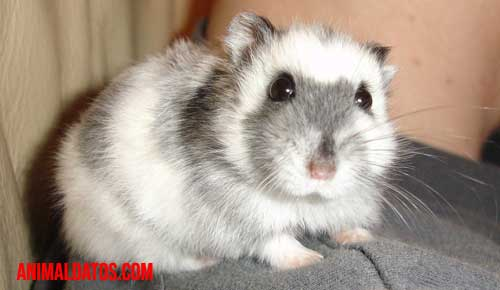 porque los hamsters se comen a sus crias