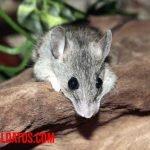 ¿Puedo tener un ratón de mascota, de los que encuentro en la cocina o basura?