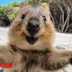 Alarmante número de selfies en Instagram con animales salvajes