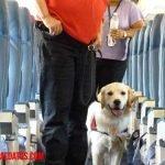 Como viajar en avión con mascotas como perro o gato
