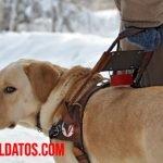 Función y ventajas de los perros para ciegos