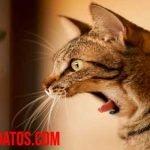 ¿Por qué los gatos se asustan con los pepinos? ¿Es verdad o mito?